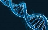 Először sikerült azonosítani a figyelemzavar kockázatát növelő géneket