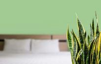 Hat légtisztító szobanövény, ami segít a karácsonyi nagytakarításnál