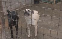 Nyílt napot rendeztek a kanizsai állatmenhelyen