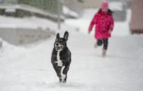 Két havazás között – Rövid volt, de jó volt!