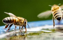 Méhészek figyelem!
