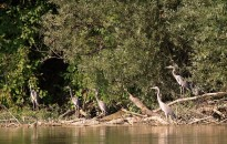A vizes élőhelyek megóvására figyelmeztetnek a természetvédők