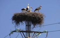Mintegy ötvenezer középfeszültségű oszlop vált madárbaráttá Magyarországon