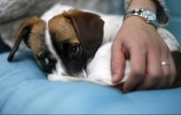 Kutyák örökbefogadását segítő kiadványt jelentetett meg a Nébih