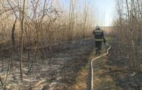 Több mint húsz hektáron égett a nádas és az erdei aljnövényzet tegnap Miklósfán