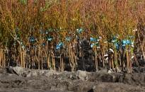 Kiemelten ellenőrzik Zala megyében a kertészeteket és a faiskolákat