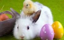 Óva intenek az élő állat ajándékozásától az állatvédők