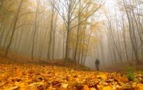 Az erdő és ember
