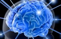 Az agy gyakori részgráfjait azonosították az ELTE kutatói