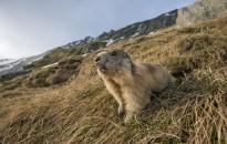 Hatással van az állatok genetikai sokszínűségére a klímaváltozás