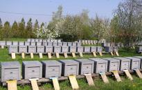 Agrárminiszter: a méhészeti termelés versenyképességét szolgálják a támogatások