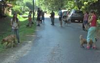 Még lehet jelentkezni az Ifjú Állatvédők Napközis Táborba
