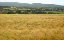 Aszály és eső - mezőgazdasági helyzetkép