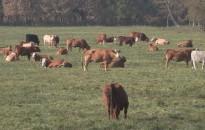 A húsmarhaágazat támogatásáról és piaci helyzetéről tanácskoztak