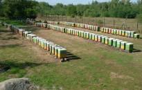 Jövedelempótló támogatást igényelhetnek a méhészek