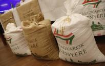 Megkezdődött a Magyarok Kenyere - 15 millió búzaszem program