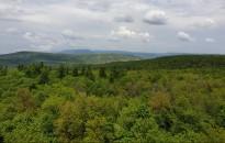 Svájci kutatók szerint az erdőtelepítés a leghatékonyabb megoldás a globális felmelegedésre