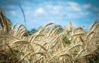 Kedvezőbb termésátlagokra számítanak Zala megyében az idén
