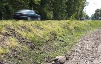 Vigyázzanak az utakon - beindult az őzek párzási időszaka