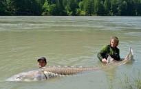Nyolcvannyolc százalékkal csökkent a nagytestű édesvízi fajok populációja 1970 óta