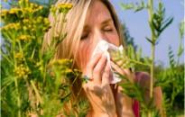 Pollenhelyzet - Tisztifőorvos: mérséklődik a parlagfű pollenszórása