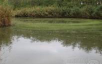 Kutató: a hazai vizekben minden élőlénycsoportból találhatóak jövevényfajok