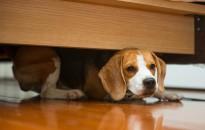 A tűzijáték miatti óvintézkedésekre figyelmezteti a kutyatartókat a Nébih