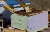 Méhészeti Egyesület: augusztus végéig jelentkezhetnek a méhészek az agrártárca támogatására