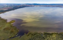 Az üledékből felszabadult foszfor lehetett a fő oka a rendkívüli algásodásnak a Balatonban