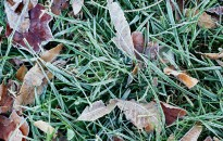 Meteorológiai szolgálat: a héten érkezhetnek az első őszi talajmenti fagyok