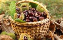 Ízletes vitaminbombák, avagy kedvenc őszi gyümölcseink, zöldségeink