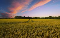 Jövő nyáron ismét teljes körű mezőgazdasági összeírás lesz