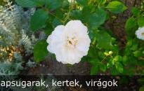 Rózsa, pálma és levendula is díszítheti egy bíróság udvarát