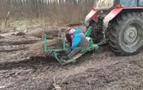 Az Agrárminisztérium támogatja az erdészeti facsemeték termelését