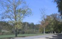 Tízmillió fa – Az ültetésben segítők jelentkezését várják a mozgalom helyi önkéntesei