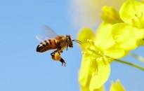 Méheknek panziót? Igen, segítsünk nekik, akár kertes, akár társas házban lakunk – meg is mutatom, hogyan