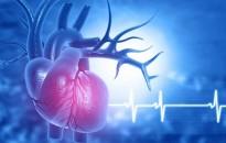 A szív- és érrendszeri betegségeket kutatják a Debreceni Egyetemen