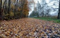Pöpec kis gyalogút lett ez – állta a sarat, no meg a vizet is a Csónakázó-tavi, vadonatúj 5 kilométeres sétány