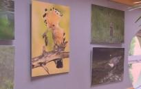 Födő Szilárd fotóiból nyílt kiállítás a Zsimondy-iskolában