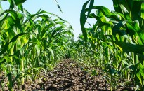 Stratégiai megállapodást kötött az agrártárca és a Nemzeti Agrárgazdasági Kamara