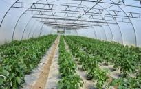 Az agrárkamara támogatást kér a fóliás kiskertészetek segítésére