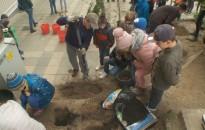 Több mint 20 növényt ültettek el a Rozgonyi-iskolában