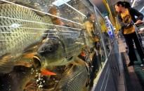 Felkészültek az ünnepi keresletre a halárusok a szakmai szervezet képviselője szerint