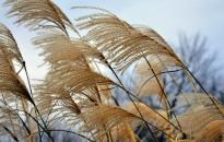 Az ország nagy részén erős szél várható vasárnap