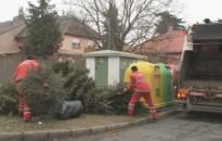 Nem maradnak a közterületeken a karácsonyi fenyők