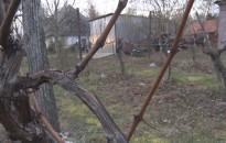 Az ültetvények jól érzik magukat, a borok tiszták