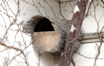 A baglyok költését műfészkekkel, költőládákkal lehet segíteni