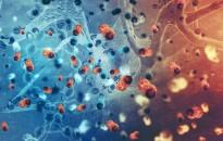 Huszonöt év alatt mintegy harmadával nőtt a világban a rákos megbetegedésben elhunytak száma