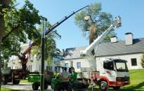 Veszélyes fák eltávolítása