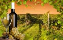Rendet kell tenni a borágazatban
